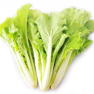 黄叶小白菜